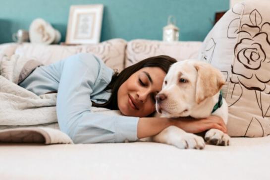 Mito ou verdade: dormir com o cachorro faz mal?